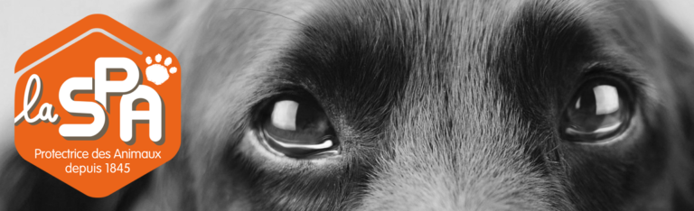 Animal errant : que dois-je faire ?